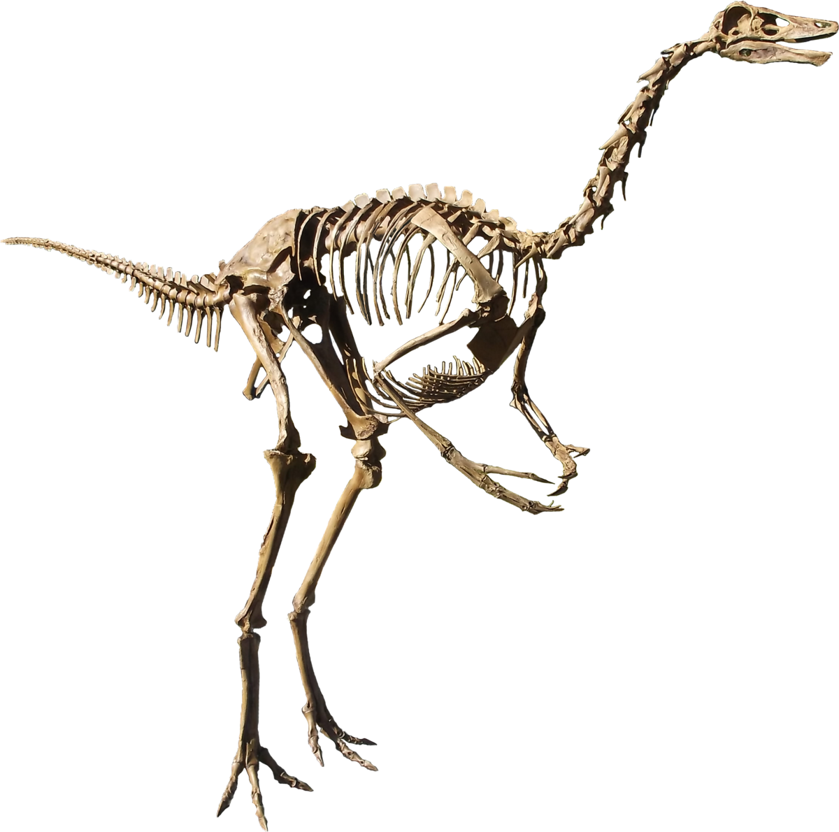 struthiomimus wikipedia