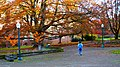 Student Walking on the University of Oregon Campus (26811370679).jpg