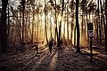 Sunny moning in a Berlin forest.jpg