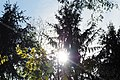 Sunshine through branches.jpg