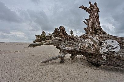 Superagui - Esculturas naturais na praia deserta.jpg