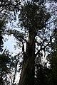 Tahune-Air walk-Tasmania-Australia01.JPG