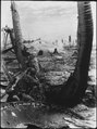 Taking the slim protection that a blasted tree affords, this Marine picks-off the Japanese in a pill box. A Japanese... - NARA - 532518.tif
