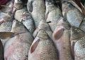 Tatlısu balıkları - Freshwater fishes 2.jpg