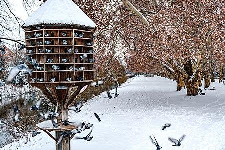 Birds in a dovecode in Tübingen