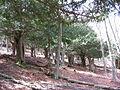 Tejeda de Tosande - Palencia - panoramio.jpg