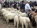 Tethered Goats (40890348614).jpg