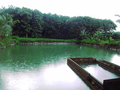Thalavoor Thrikkonnamarkodu Durga Devi Temple Pond.png
