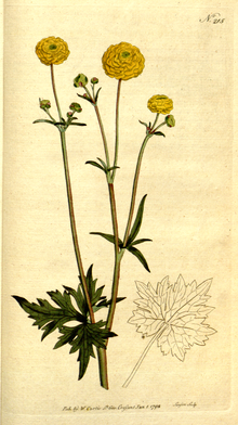 The Botanical Magazine, Plate 215 (Volume 6, 1793).png