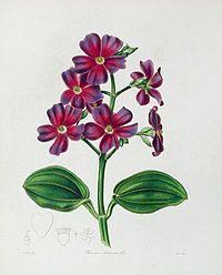 The Botanist15