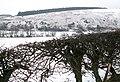 The Braes, near Oldhamstocks - geograph.org.uk - 335092.jpg
