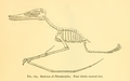 The Osteology of the Reptiles-317 hbhb j.png