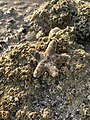 The Star on Shore.jpg