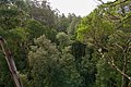 The Treetop Walk - Enjoying the forest from 30m high (18763391504).jpg