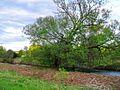 The old tree - panoramio.jpg