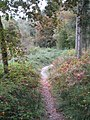The path into Bishop's Wood at Lanner Mill - geograph.org.uk - 1013517.jpg