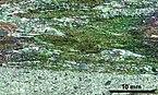 Thin section scan crossed polarizers Siilinjärvi 501-M3.jpg