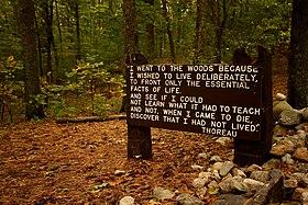 frasi vita nei boschi