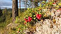 Torsby N, Sweden - panoramio (18).jpg