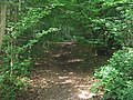 Track in Tangle Wood - geograph.org.uk - 1376507.jpg