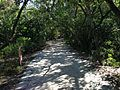 Trail in De Soto National Memorial.JPG