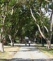 Tree-lined park walkway and road. READ INFO IN PANORAMIO-COMMENTS - panoramio.jpg