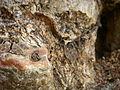 Tree bark macro (3189404254).jpg