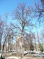 Trees in Memorial park 06.JPG