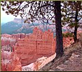 Trees on Edge, Bryce Canyon, UT 9-09 (8617417036).jpg