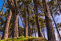Trees on mount Urgell - San Sebastian, north Spain - panoramio.jpg