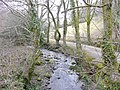 Tributary of the Lynher - geograph.org.uk - 1759931.jpg