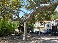 Trsteno Platanus Orientalis-003.jpg
