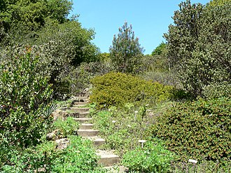 University of California Botanical Garden - California chaparral flora garden in the Native California flora section.