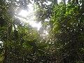 U Kepu prašuma.jpg