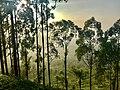 Upcountry Sri Lanka.jpg