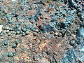 Ussangoda-rock-with-rabbit-feces.JPG