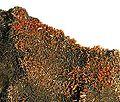 Vanadinite-184720.jpg