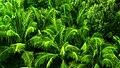 Vegetacion de Numea.jpg