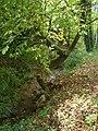 Venon (Isère) ab11 ruisseau.JPG