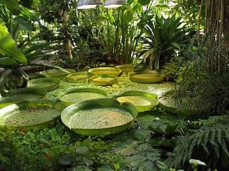Botanischer Garten Münster - Victoria Regia, Viktoriahaus