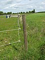 View along electric fence - geograph.org.uk - 1294805.jpg