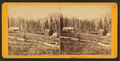 View of Cottonwood Canyon, by Savage & Ottinger.png