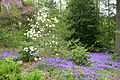 View of Longwood Gardens - DSC00978.JPG