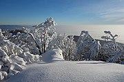 Vihorlat (v zime) 043.jpg