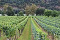 Vineyards in Wachau, Austria.jpg