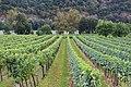 Vineyards in Wachau, Austria.jpg