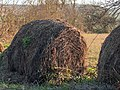 Vitoria - Olarizu - Rollo de paja 01.jpg
