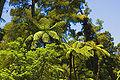 Waitakere Forest n.jpg