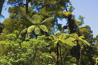 Waitakere Ranges mountains in New Zealand