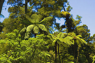 Waitakere Ranges - Typical forest in the Waitakere Ranges